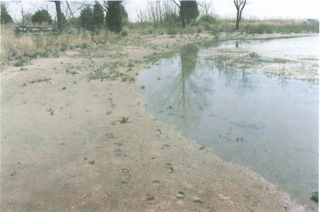 Evidence of a once sandy beach ( image circa 1994 ).