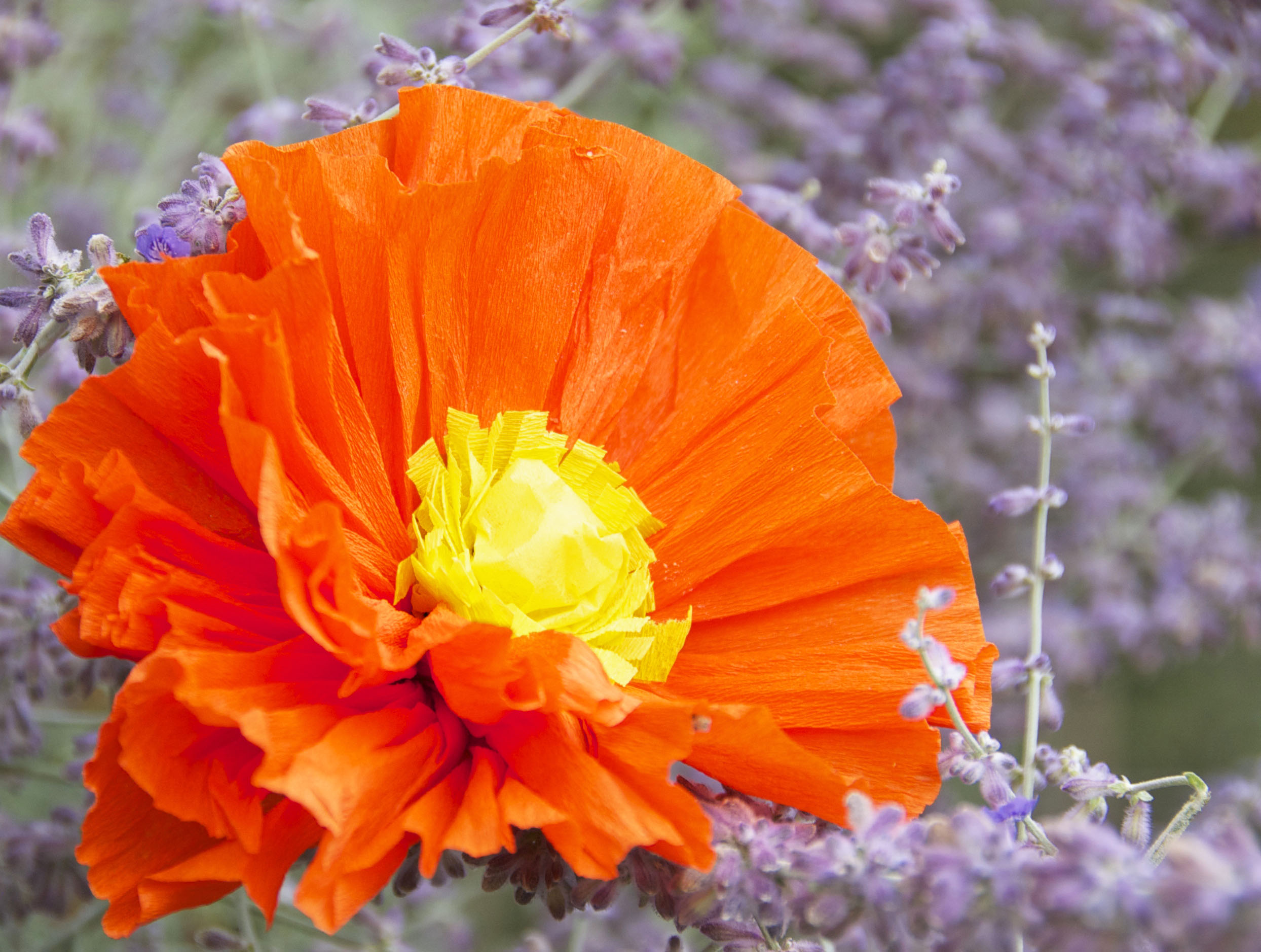 Red Poppy (created from Italian Crepe Paper) photographed with real lavender.