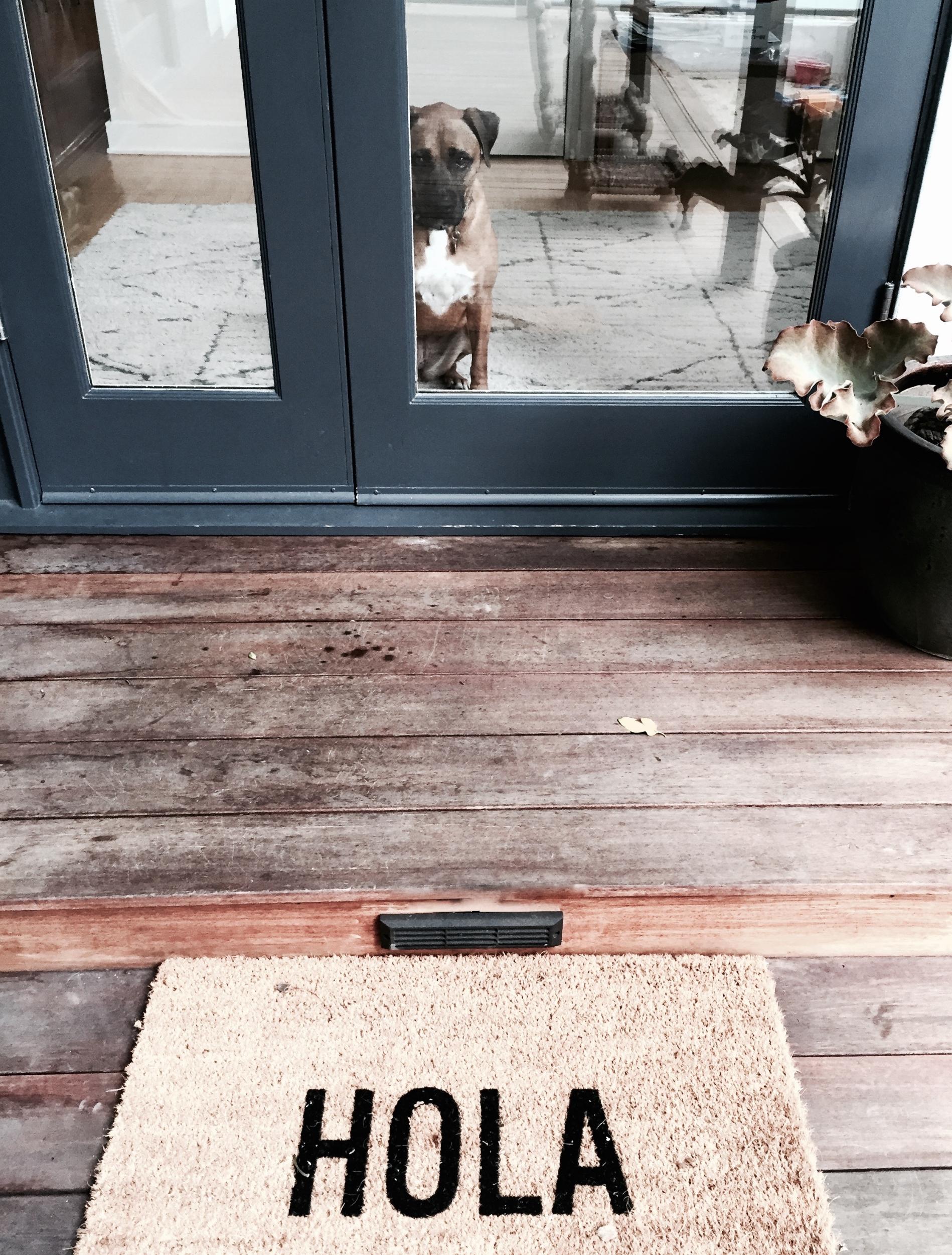 Hola Stella.jpg