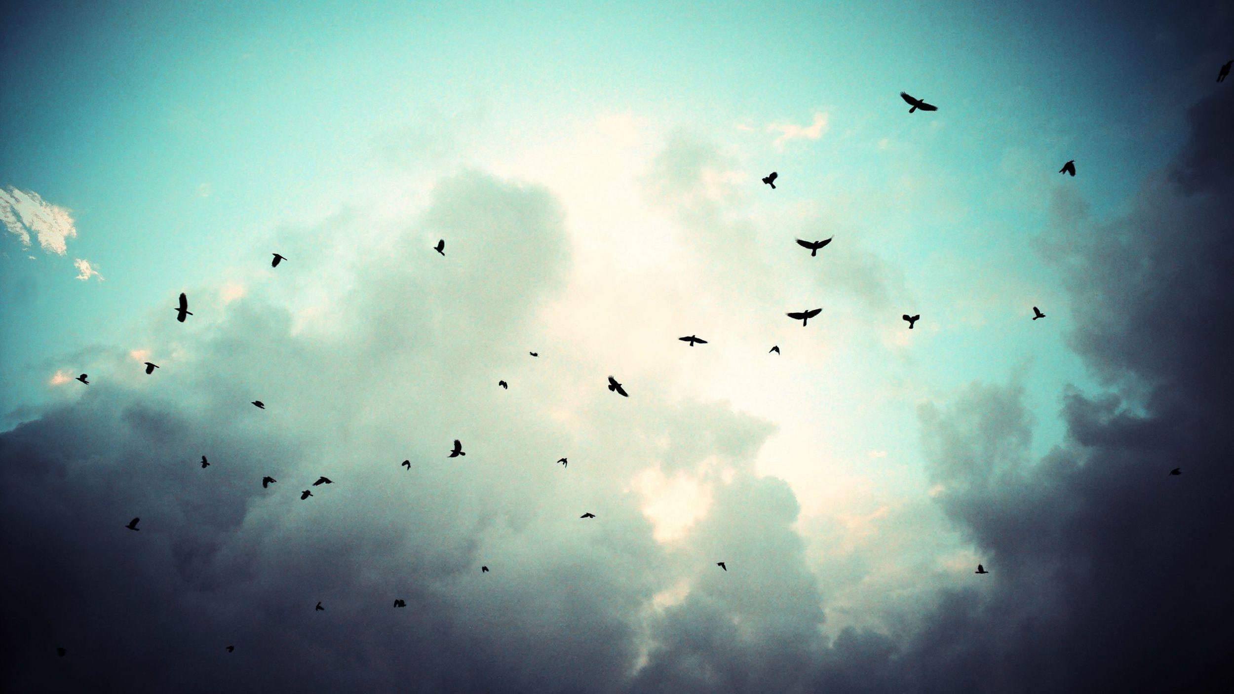 sky_and_birds_2560_x_1440_1396049021.jpg