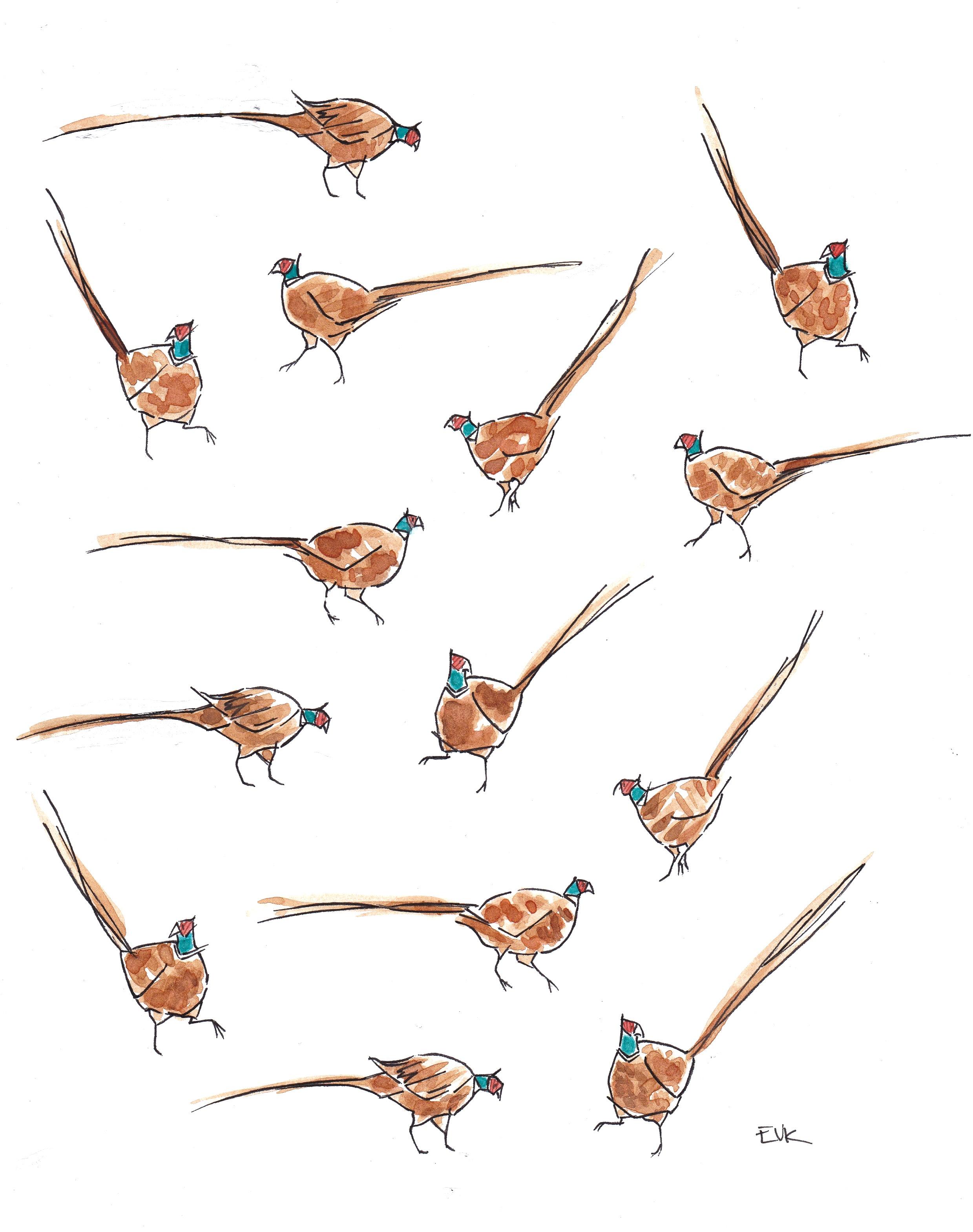 Pleasant Pheasants 2015