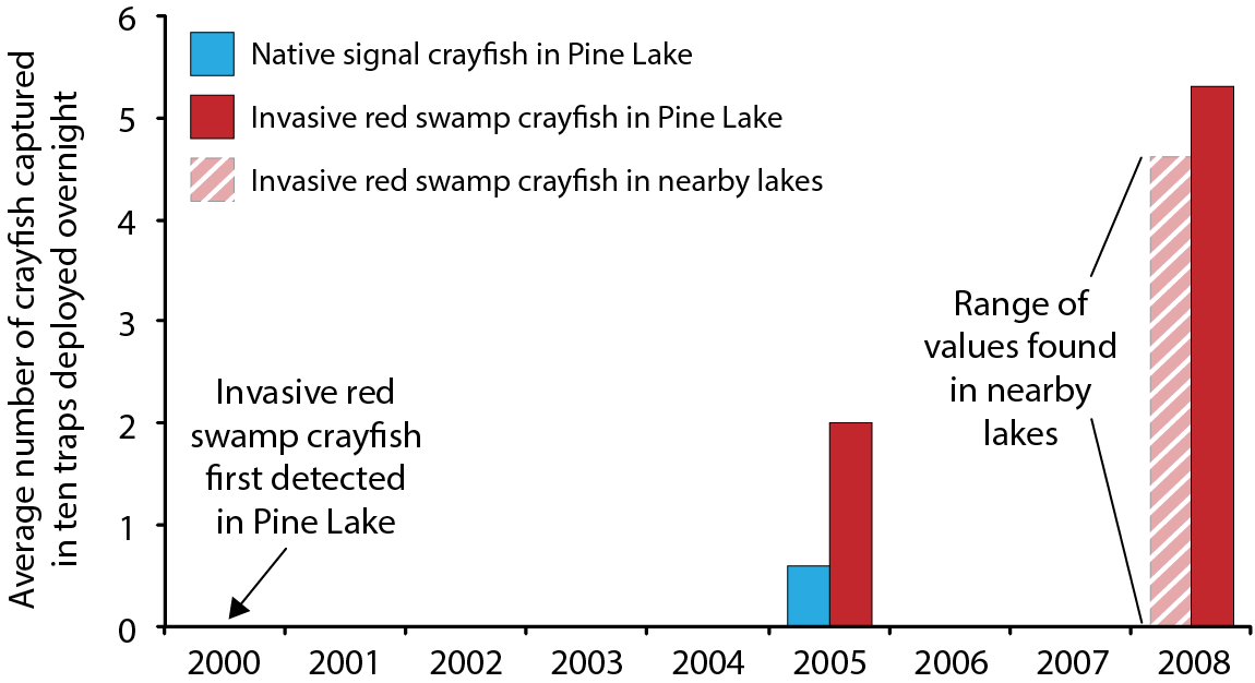 Red swamp crayfish were first officially detected in Washington State in 2000, in Pine Lake, a tiny lake (just eight tenths of a mile by four tenths of a mile at its widest point) 20 miles east of Seattle. Five years after they were first recorded in Pine Lake, the invasive red swamp crayfish population was much larger than the native crayfish population. (Native crayfish population was not reported in 2008.)   Note : 2008 values were calculated from 24-hour sampling periods, with the assumption that capture rate was equal throughout the 24-hour period - because crayfish are more active at night, the calculated values may be underestimates.   Sources : First detection in Pine Lake from  Mueller 2001 ; 2005 values from  Mueller 2007 ; 2008 values calculated from  Larson & Olden 2008 .  (Figure by Emily Benson)