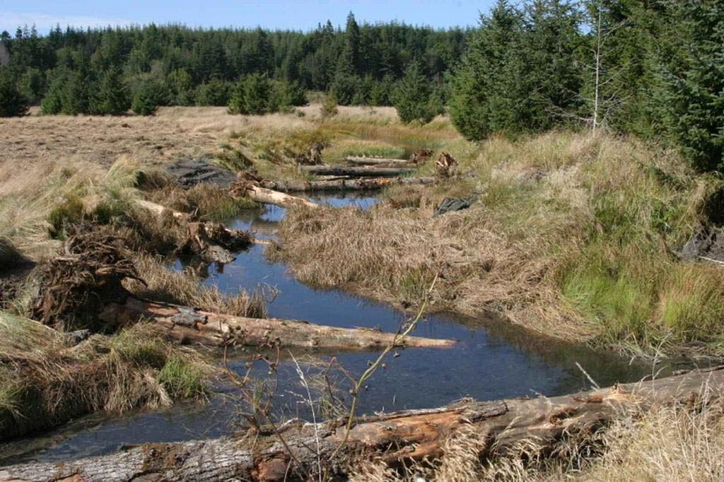 Pieces of large woody debris were added to a stream in Bandon Marsh National Wildlife Refuge on the Oregon coast in an effort to improve fish habitat.  (Image by U.S. Fish & Wildlife Service via  Wikimedia Commons )