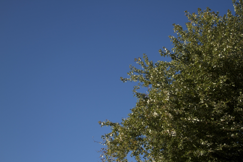 Blue October sky!