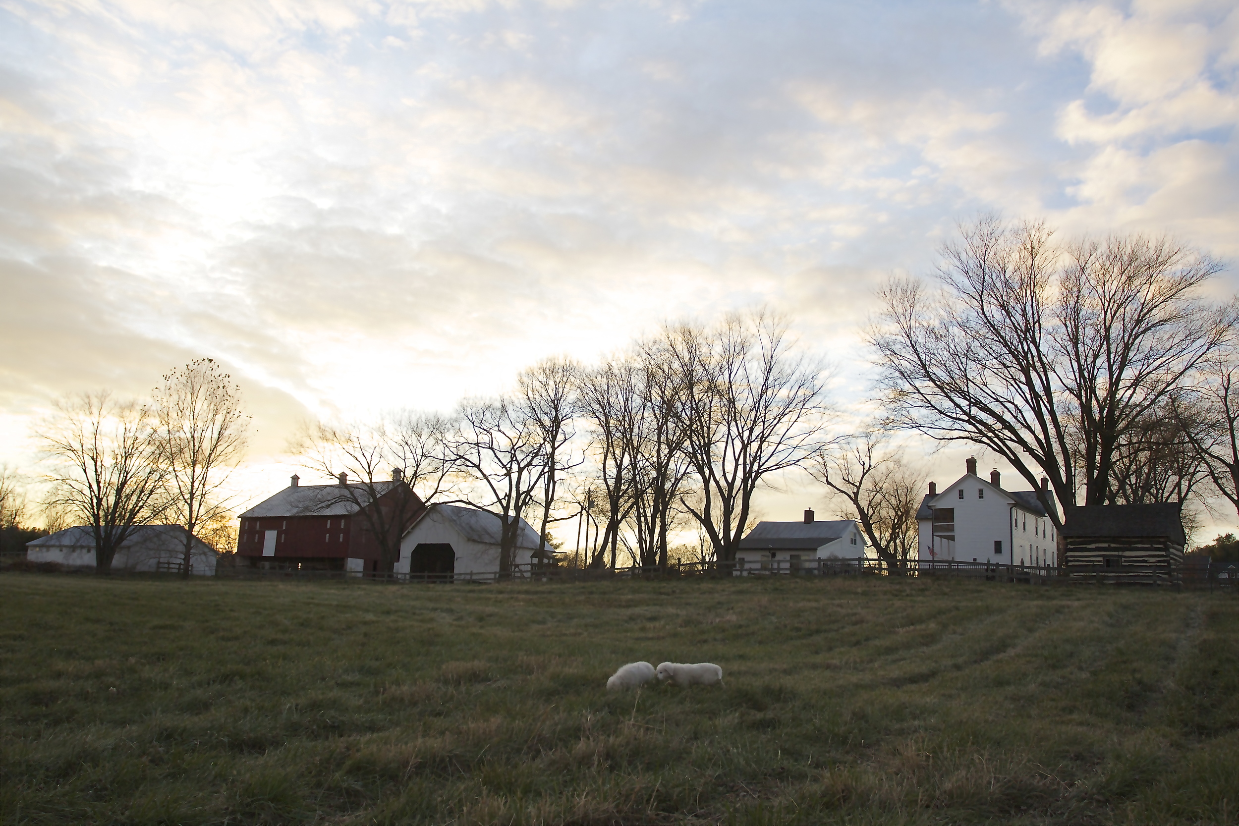In the lower pasture looking back up towards the house