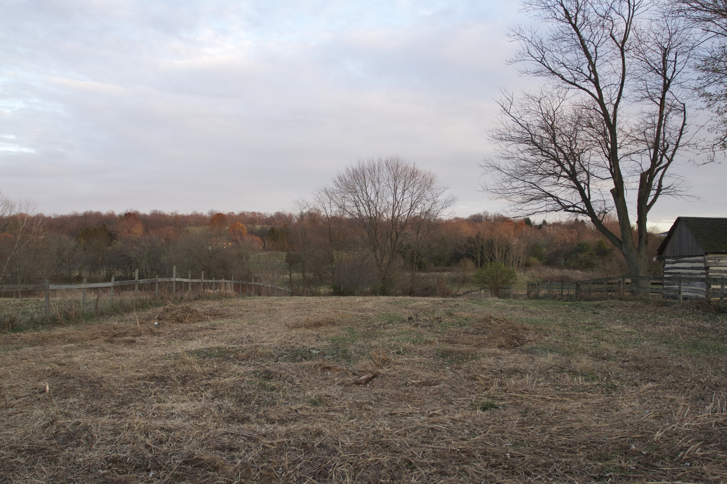 """""""After"""" - Dad cut back all of the Johnson grass this fall and we removed about 20 junk trees + overgrown stakes, electric fencing, etc."""