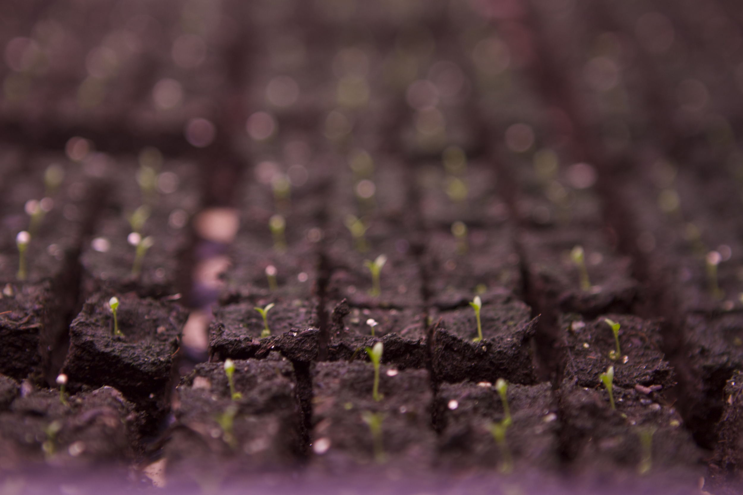 Lisies!!! The tiniest of all the seedlings in all the land!!