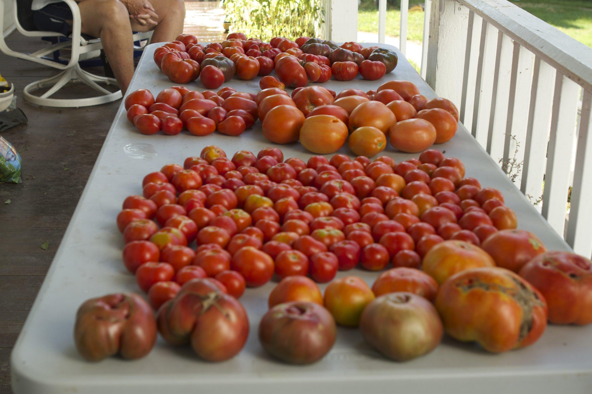 we like tomatoes