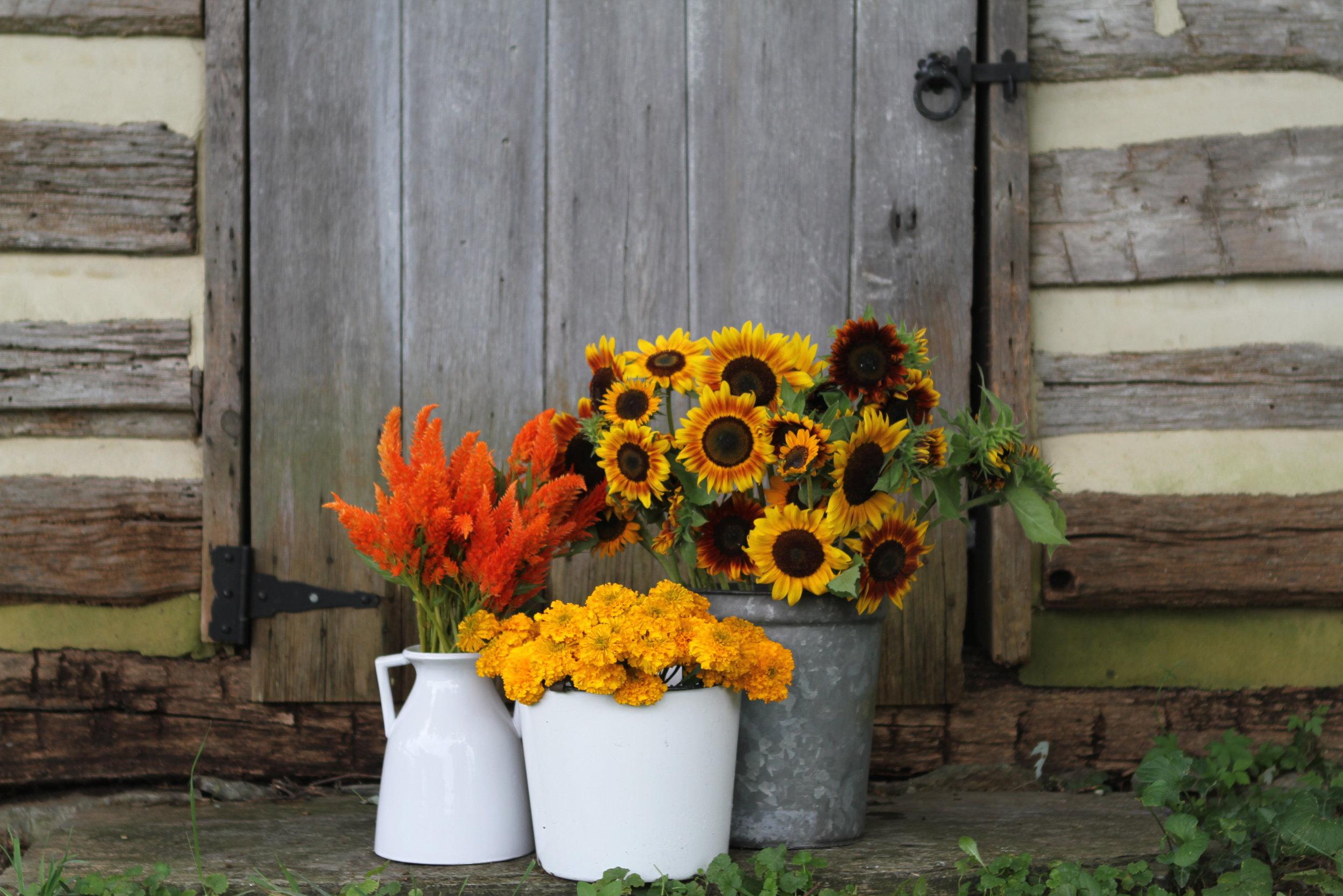 Yellow and Orange flowers.JPG