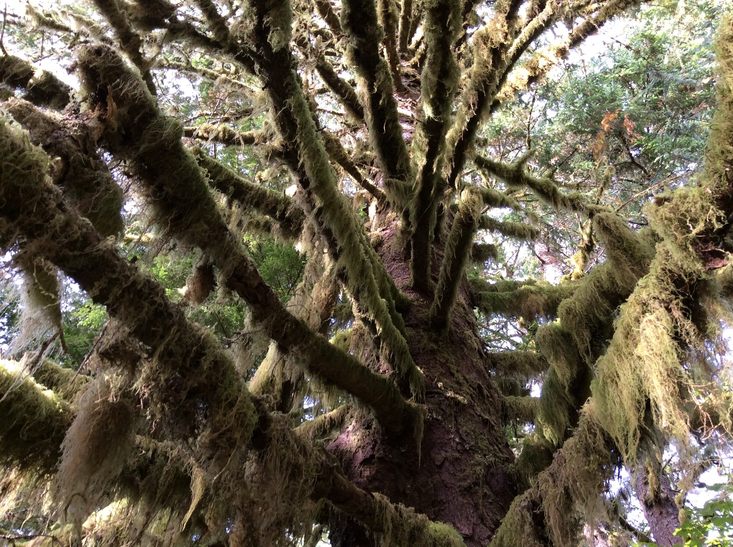 'Old Growth'