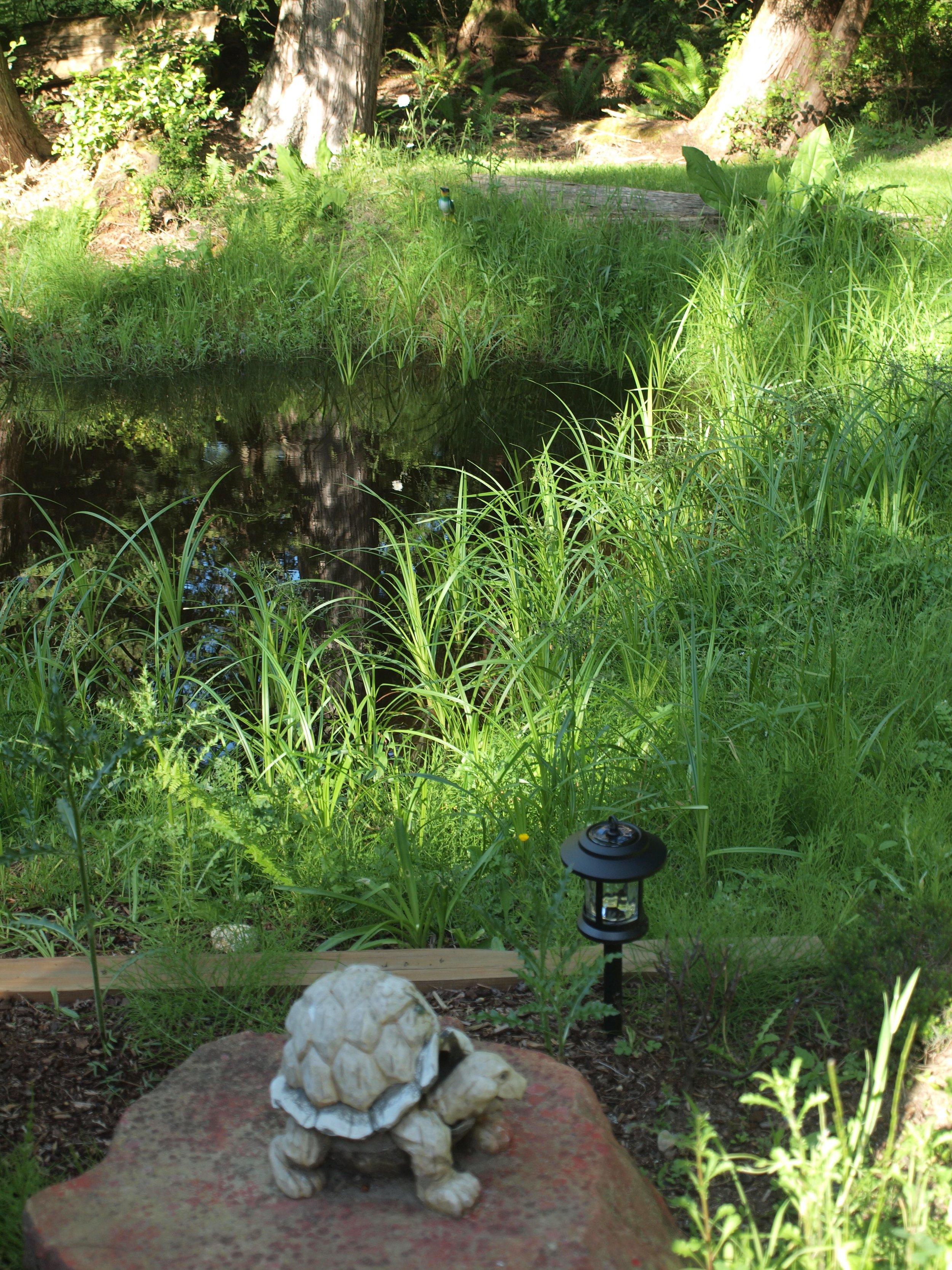 nomadic_bull_bed_and_breakfast_small_pond.jpg