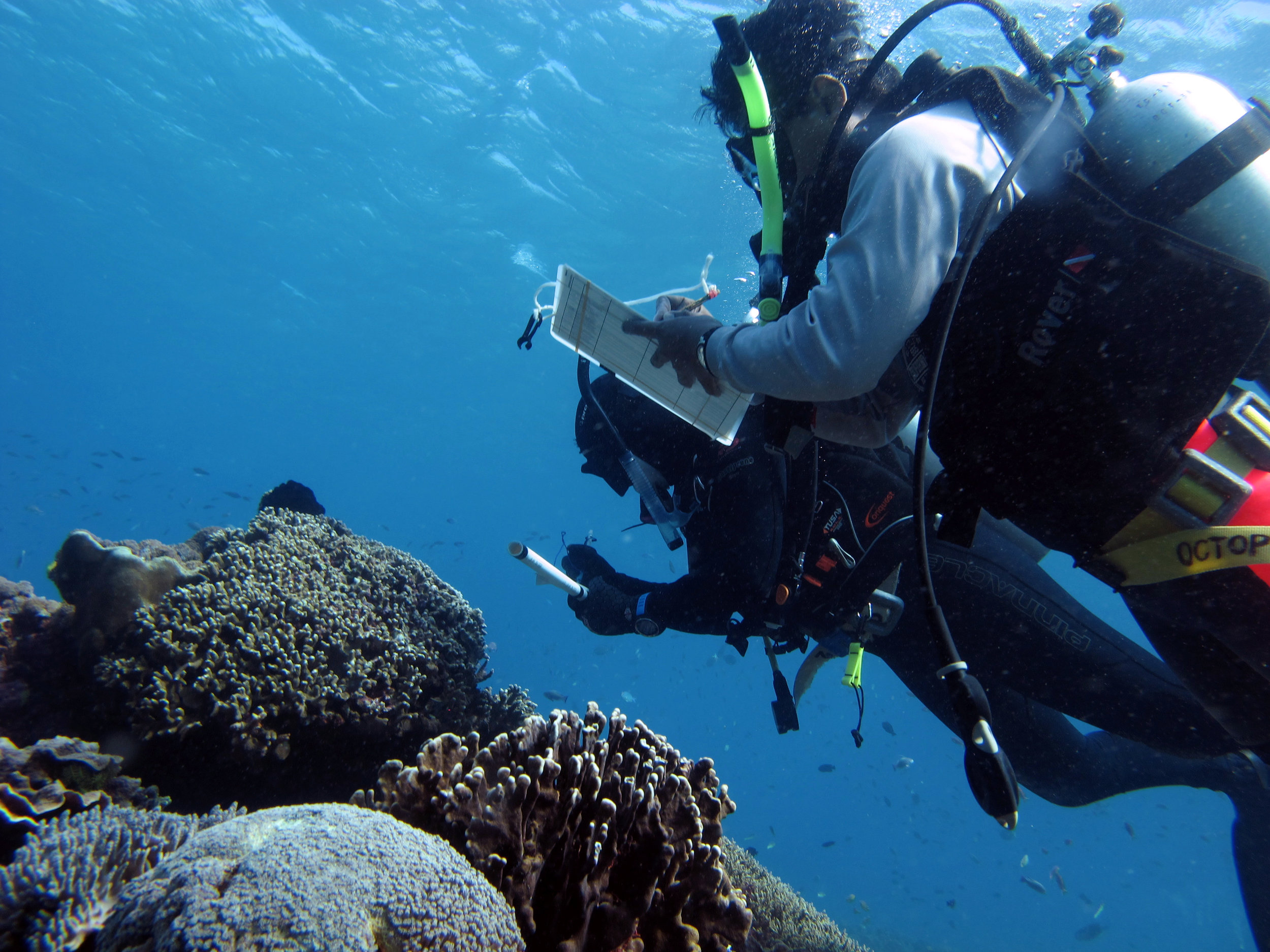 Reef surveys indonesia.JPG