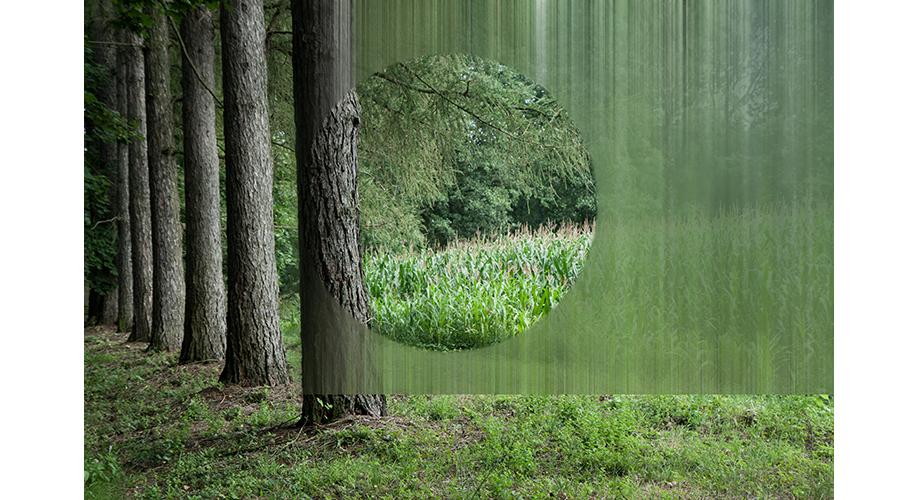 tree6.jpg
