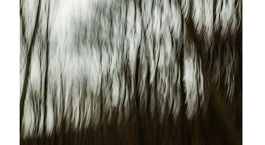 Tree8.jpg