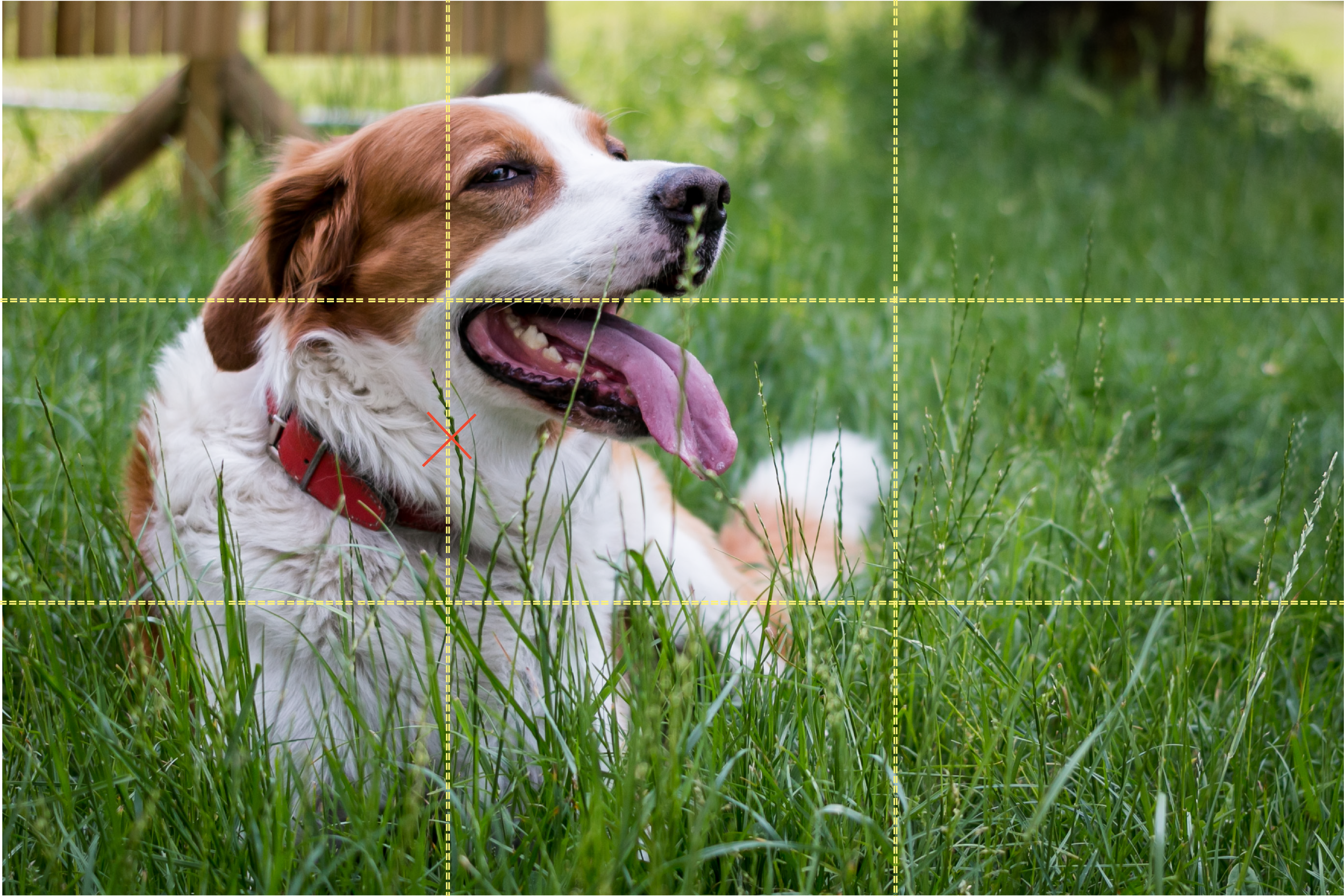 Rule of thirds dog