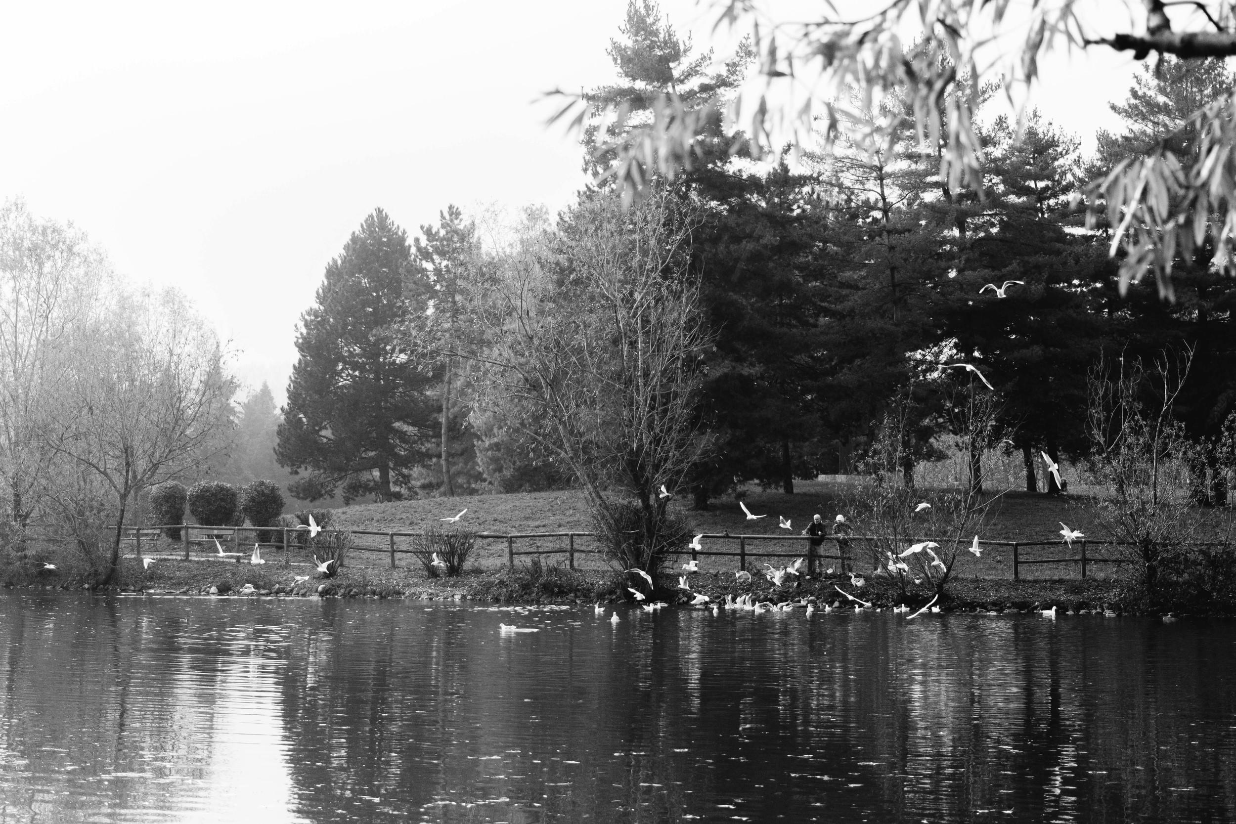 Fall fotografia autunno torino parco cani pellerina