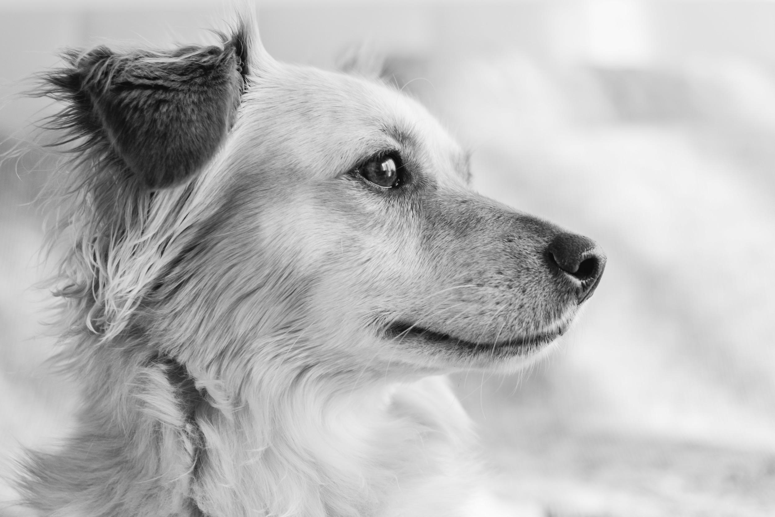 cane ritratti fotografo torino Laura Griffiihs Fotografia