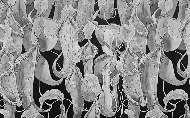 My Inktober for frail, swing and pattern all in one artwork. I've always loved these hanging pitchers. #inktober2019 #inktober #plants #pattern #ink @inktober