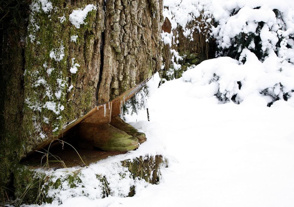 giardino_inverno_2