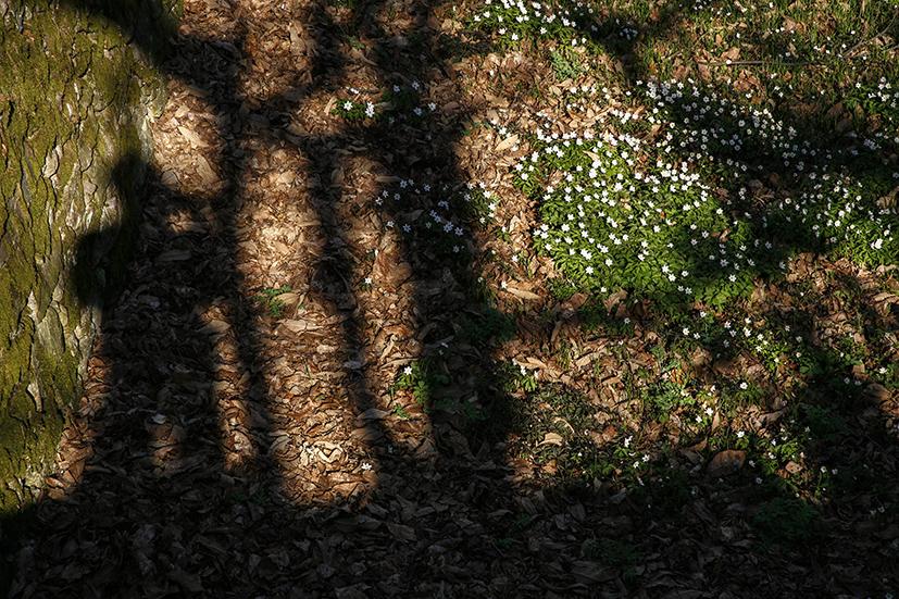 primavera1 172_mail.jpg