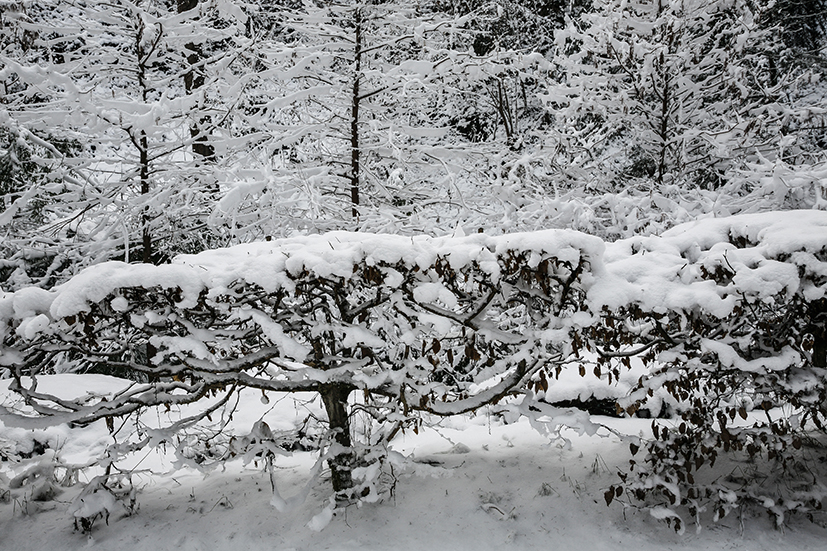inverno 143_psMail.jpg