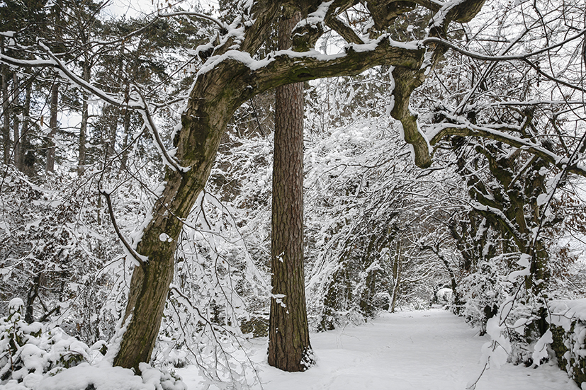 inverno 155_psMail.jpg