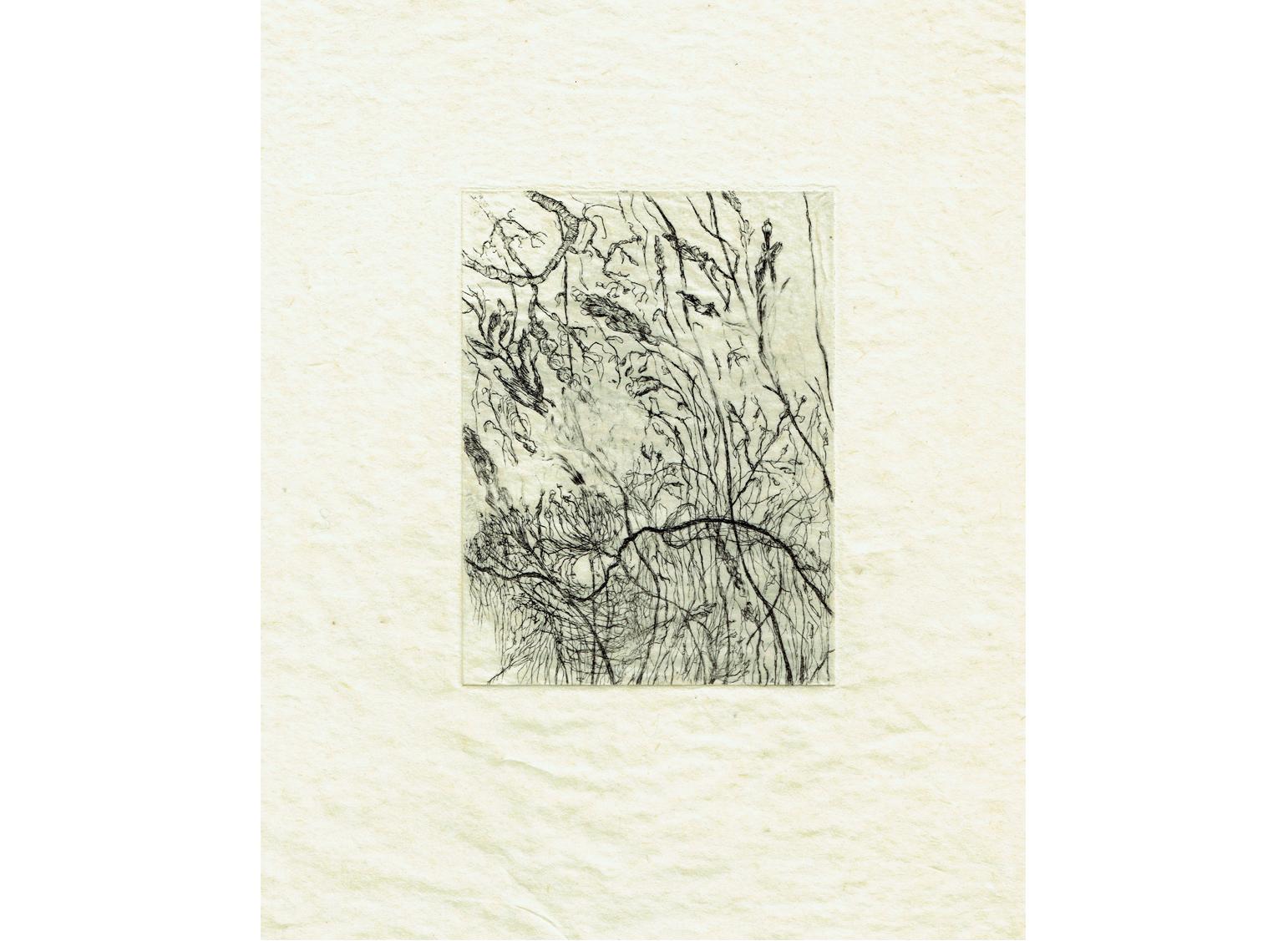 Les hautes herbes, eau-forte, 12cm x 9cm