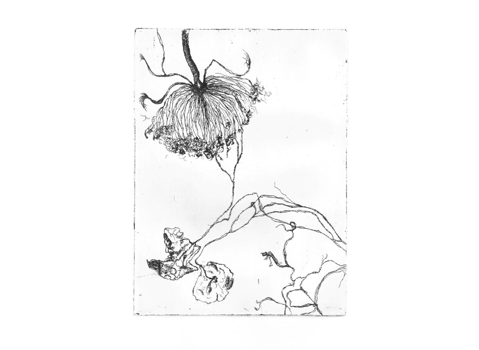 Inflorescence, eau-forte, 15cm x 21cm
