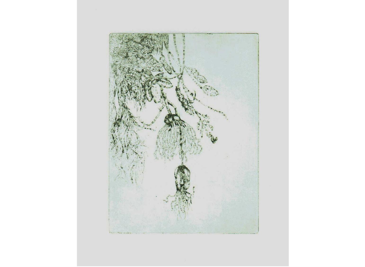 Curiosité végétale, eau-forte sur papier Moulin de Couzi, 20 x 30 cm