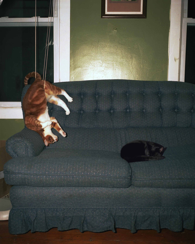 Cat Stuck in the blind strings.jpg