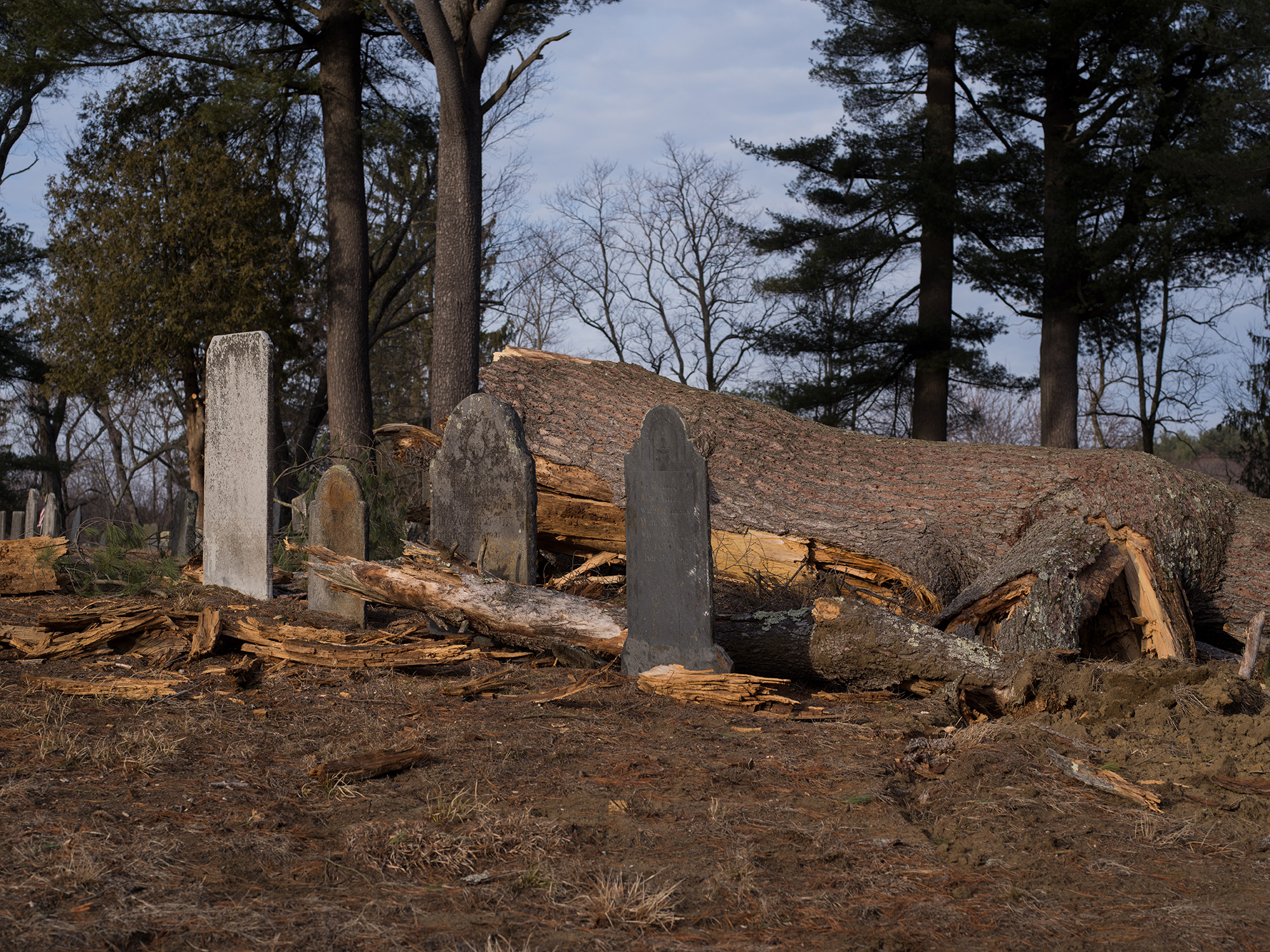 Tree on headstones_Master (2)_1.jpg