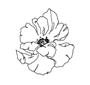 Dori-Nix-Branding-Concepts _ FINAL-Flower-2.jpg