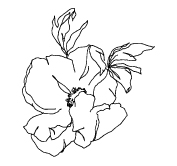 Dori-Nix-Branding-Concepts _ FINAL-Flower-4.jpg
