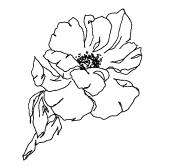 Dori-Nix-Branding-Concepts _ FINAL-Flower-5.jpg