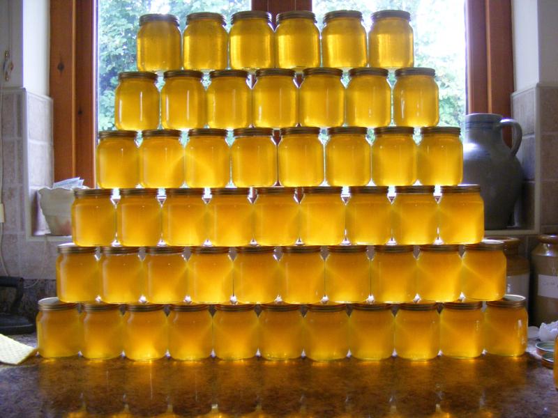 Honey Harvest option 2_opt.jpg