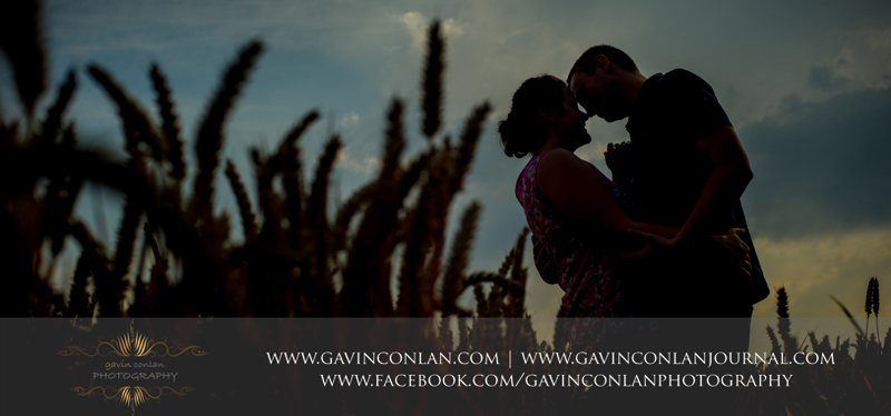 silhouette of couple in corn field. Essex engagement photography by gavin conlan photography Ltd