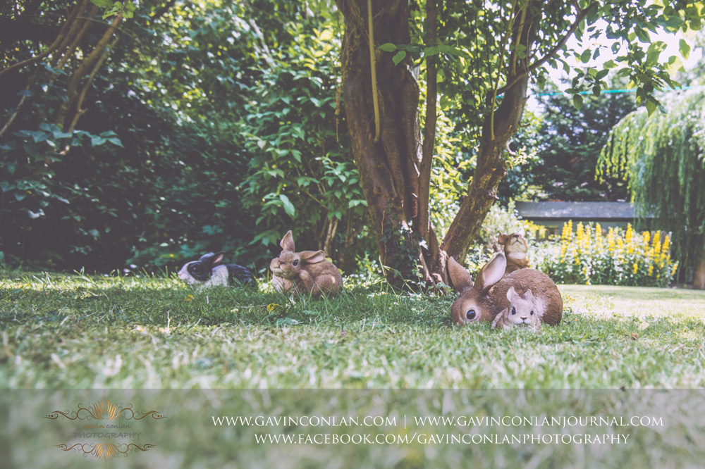fun photograph of the rabbit statues in the garden of the Alconbury Guest House. Wedding photography at  Alconbury Guest House  by  gavin conlan photography Ltd