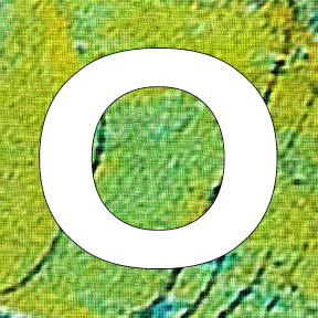50 o green tray.jpg