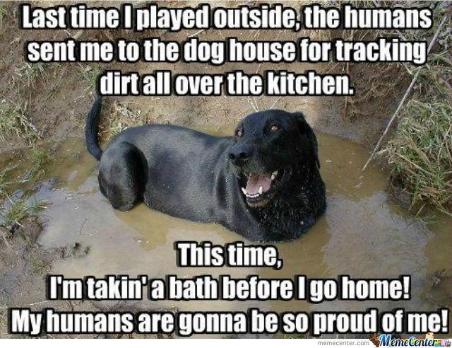 mud-puddle-dog.jpg