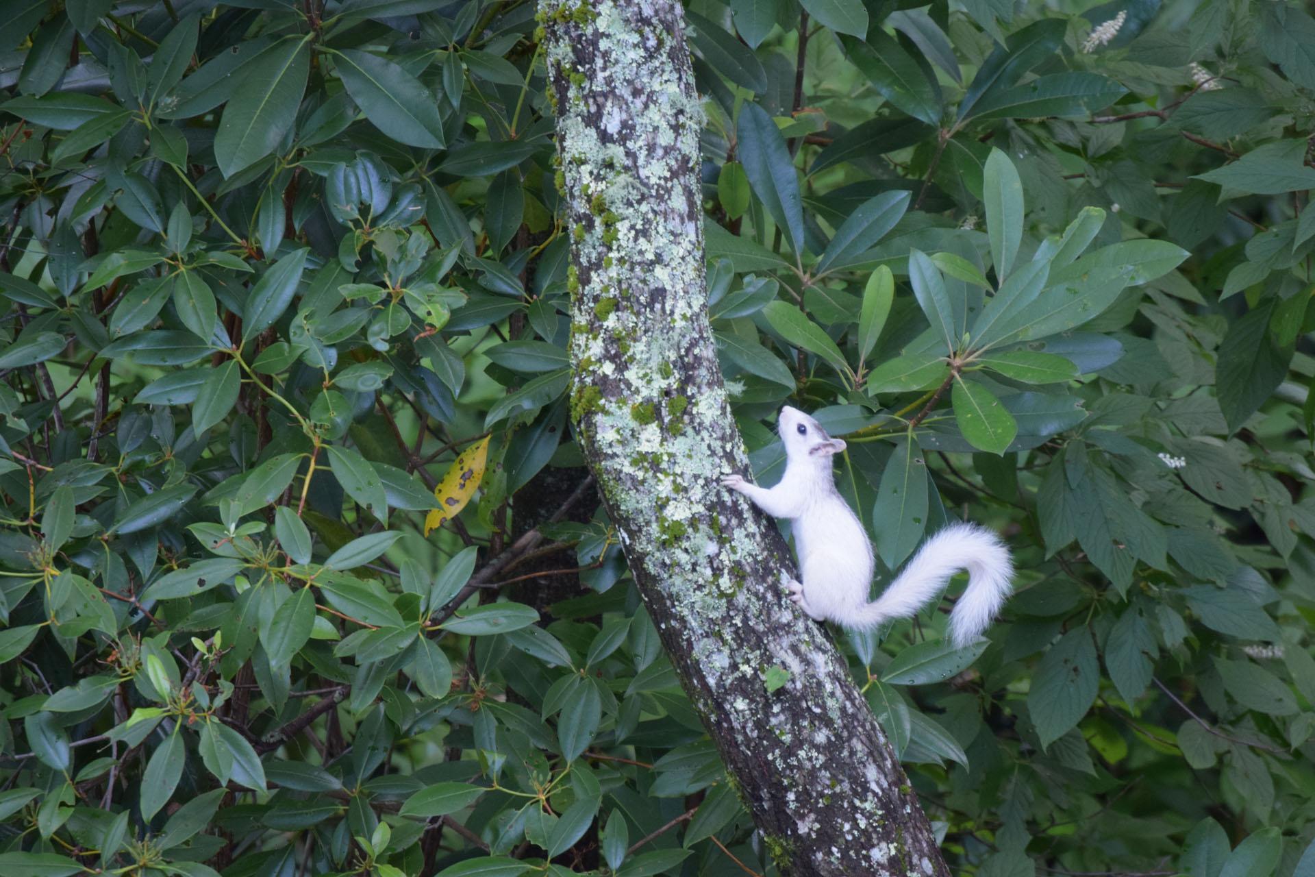 WhiteSquirrel_1920.jpg