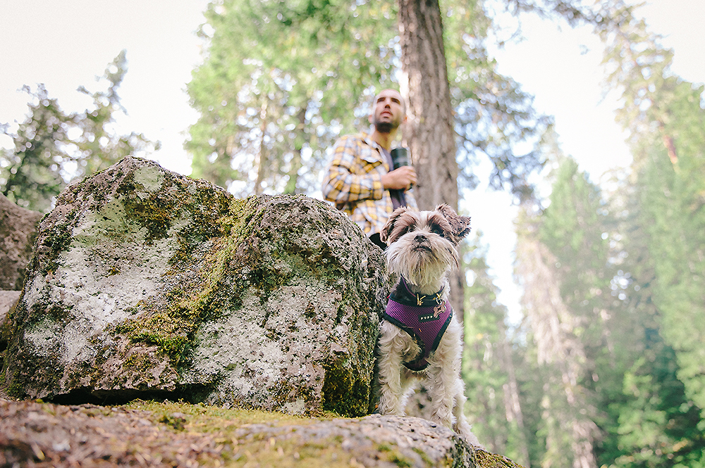Oregon Road Trip Photographer 11