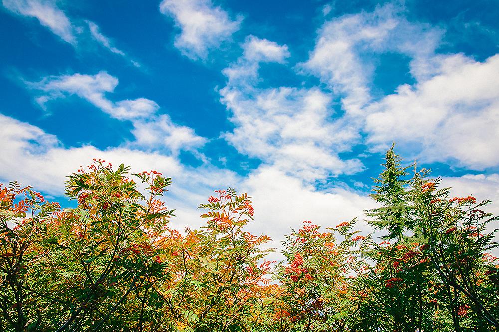 Oregon Road Trip Photographer 16