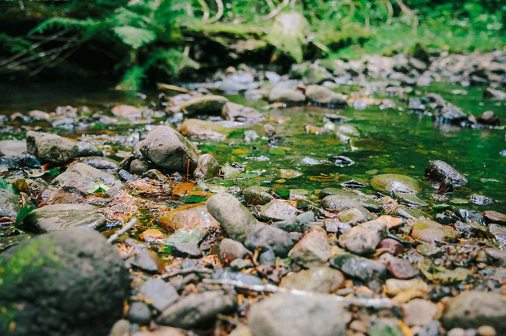 Oregon Road Trip Photographer 41
