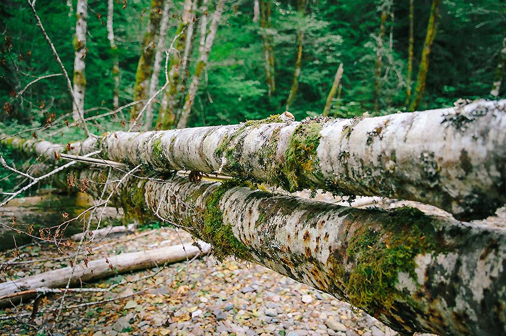 Oregon Road Trip Photographer 46