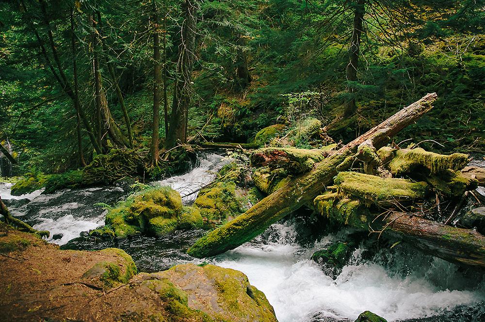 Oregon Road Trip Photographer 57