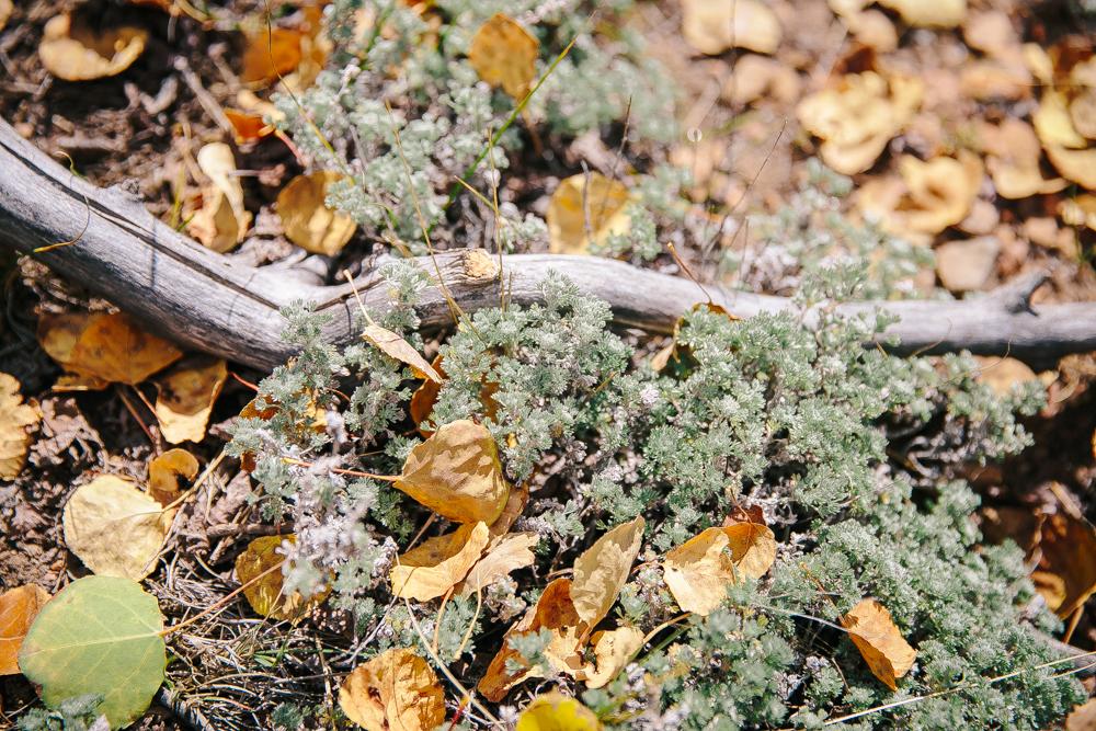 Colorado Road Trip0019.jpg
