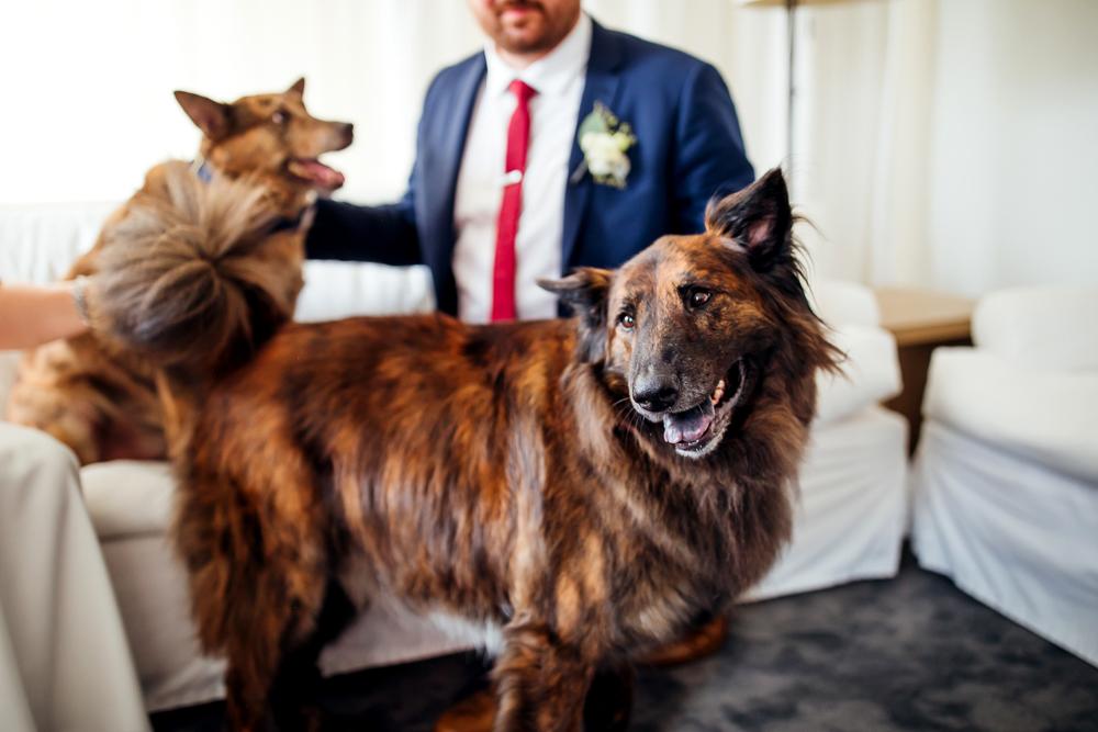 the ambassador hotel chicago wedding-87.jpg