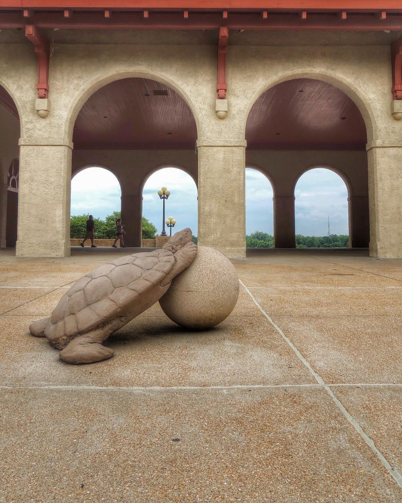 Turtle WFP.JPG