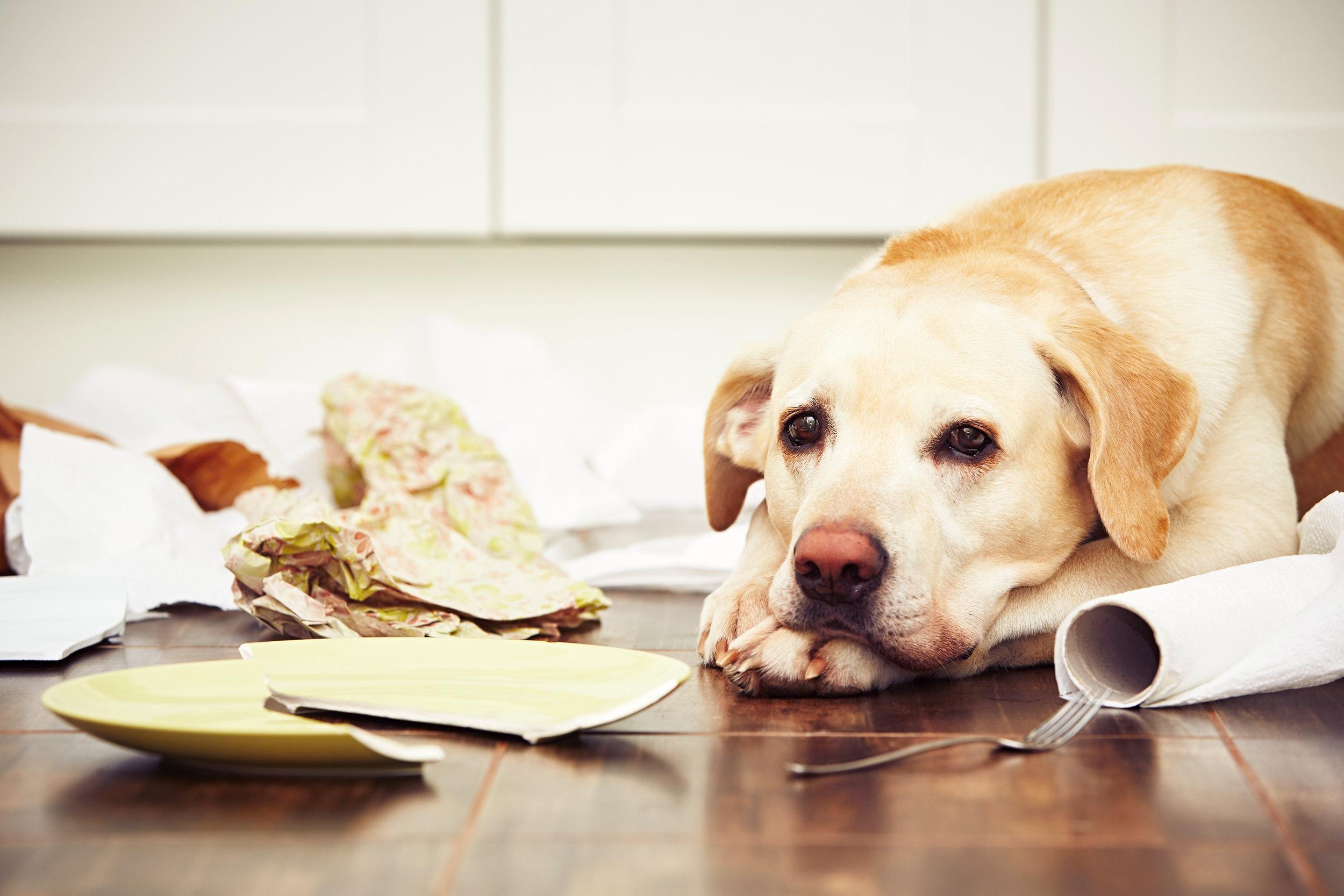Naughty-dog-497383440_3869x2579.jpeg