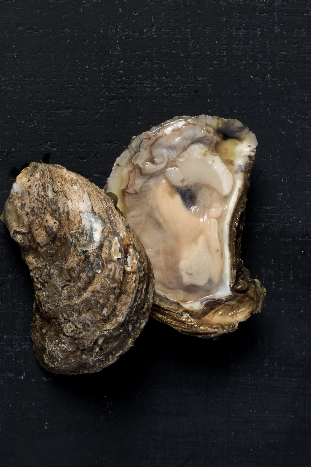 20171005_Oysters_741.jpg